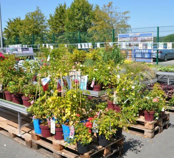 batzner-standort-hirschaid-pflanzen